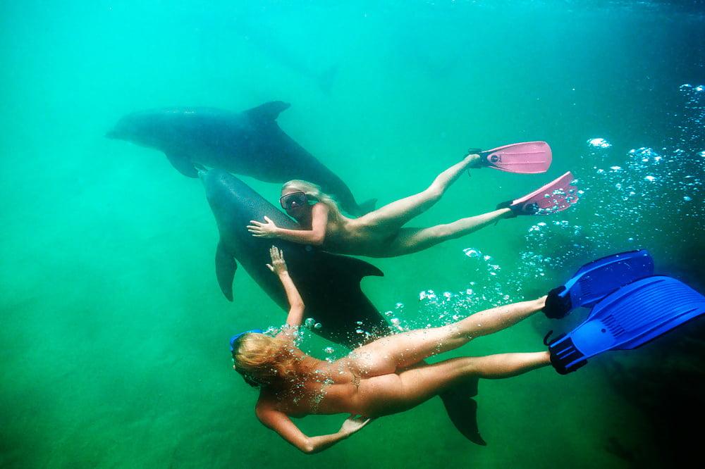 Aggressive Dolphin