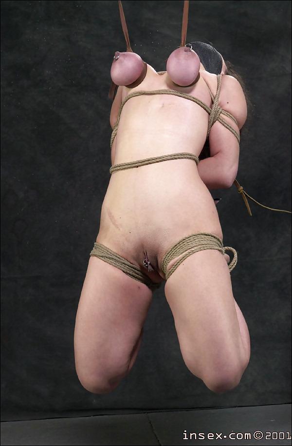 Insex seven